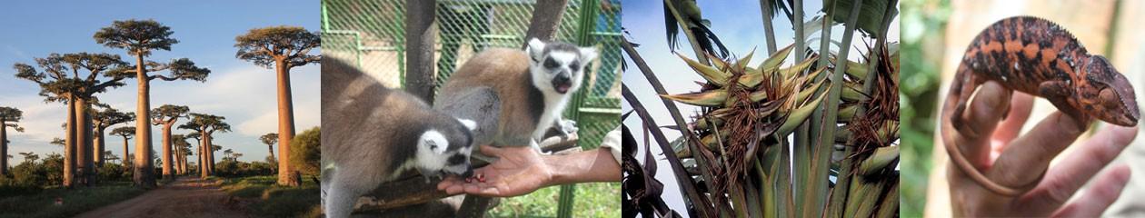 Madagaskarreis 2017