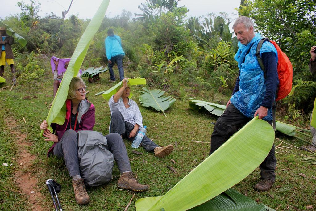 We gebruiken de bladeren van de reizigersplant als paraplu tijdens een kort regenbuitje